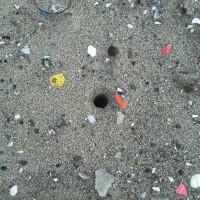 スナガニ巣穴@仙台市荒浜海岸