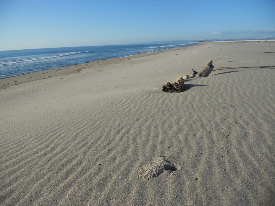 九月の閖上浜 ① (2014.09.19)