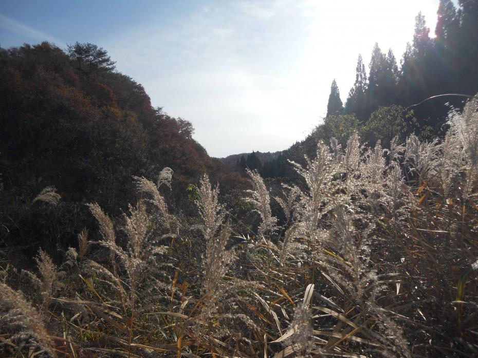 増田川源流の道 30