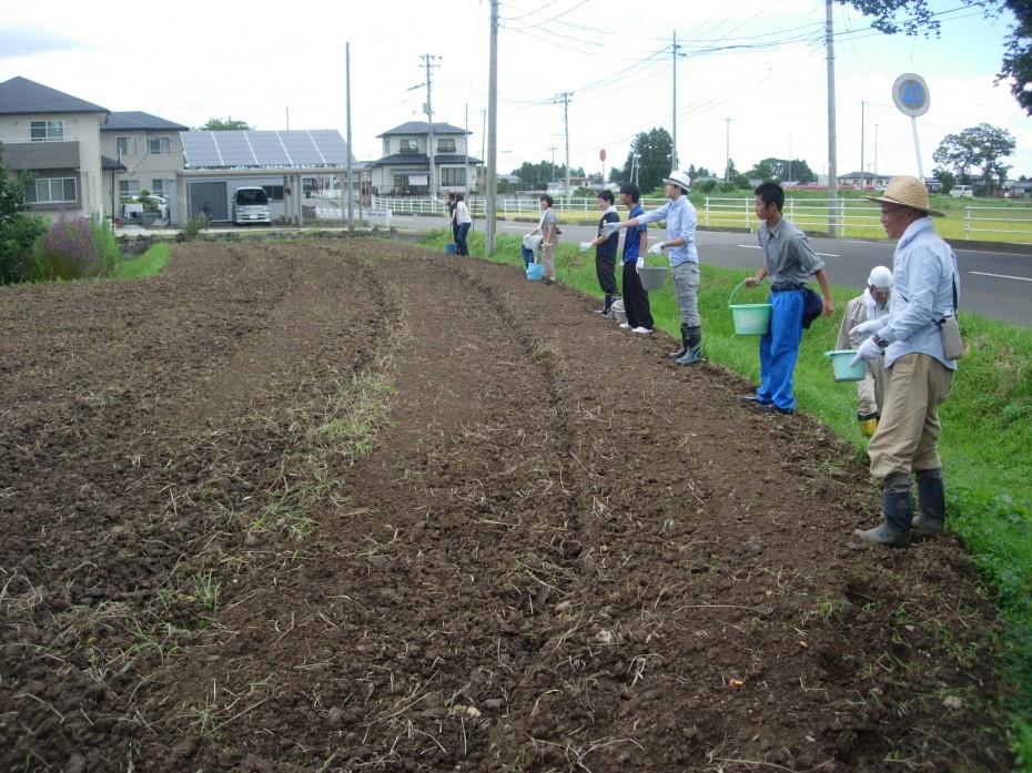 レンゲの種蒔き ③ (高舘圃場 2014.09.13)